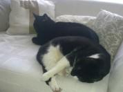 Sammy en Moortje